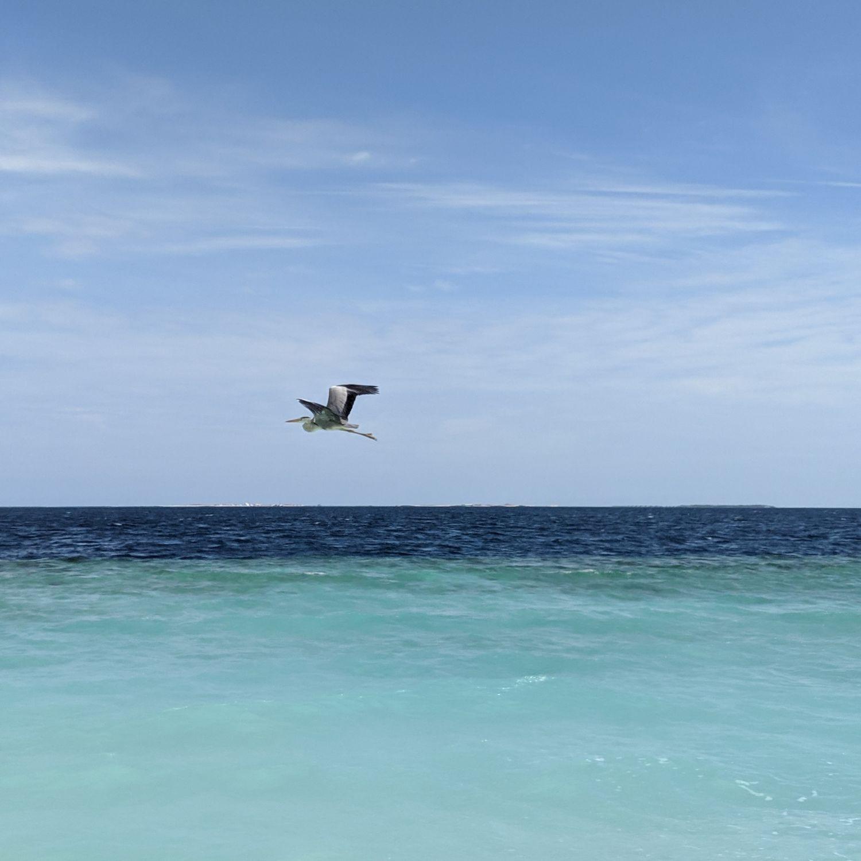 waldorf astoria maldives ithaafushi heron